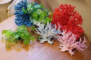 aquarium plantjes, stockverkoop antwerpen